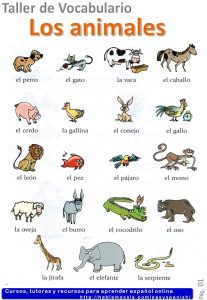 Animals in Spanish, learn vocabulary with quizzes.