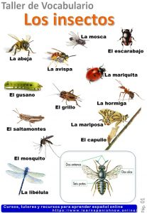 Insects in Spanish, learn vocabulary with quizzes.
