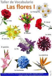 El nombre de la flores en español_Infografía